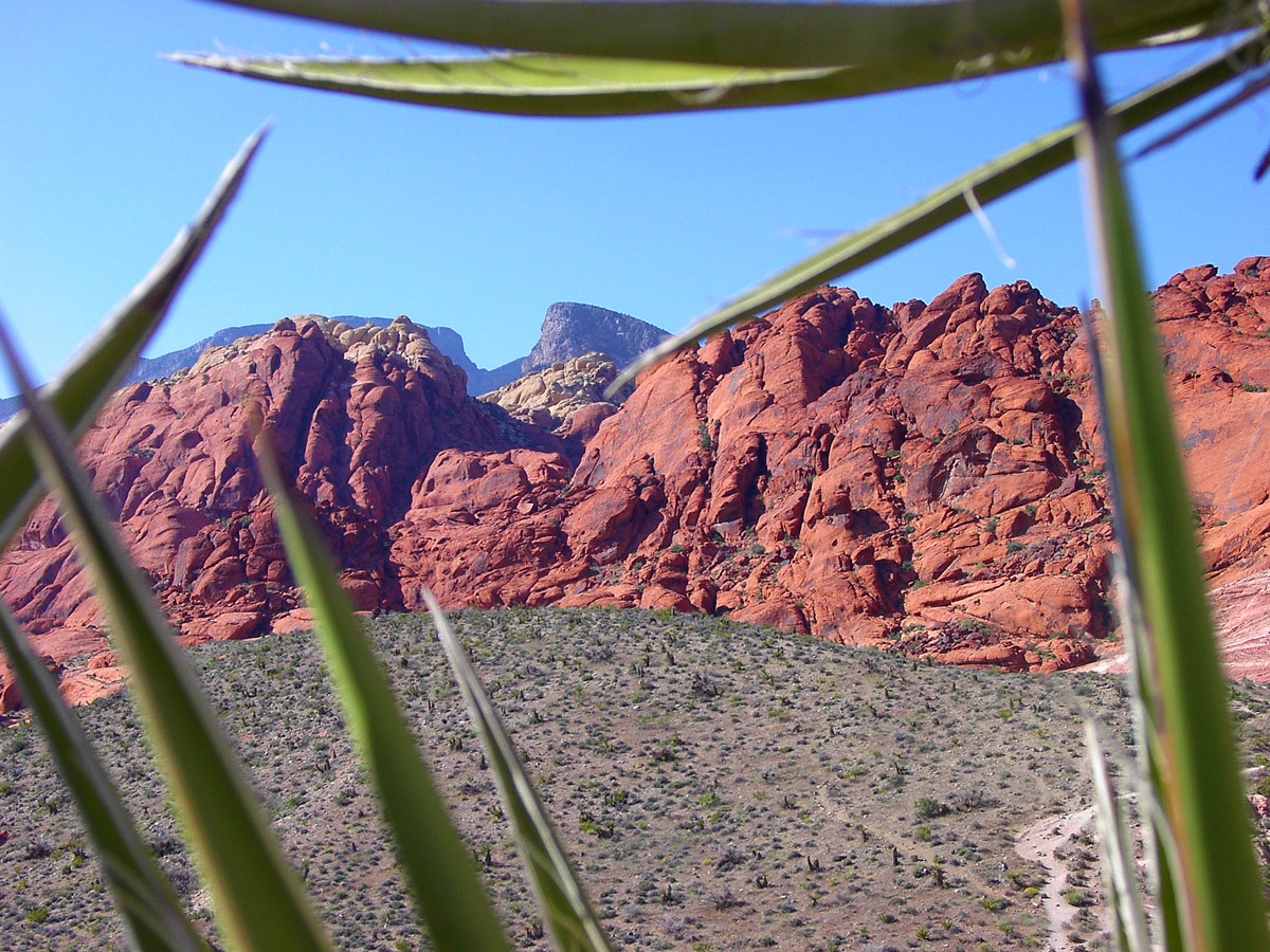 Red cliffs and mountains framed through desert leaves - things to see in the American Southwest