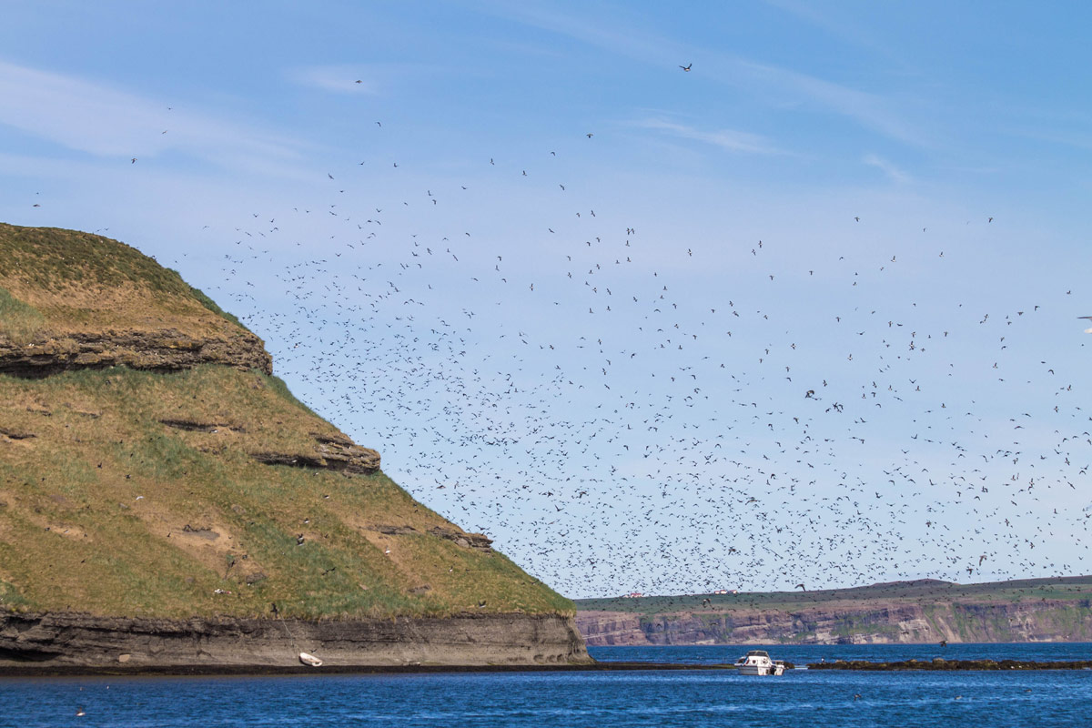 thousands of birds fly near an island in Iceland - An Epic 14 Day Iceland Itinerary