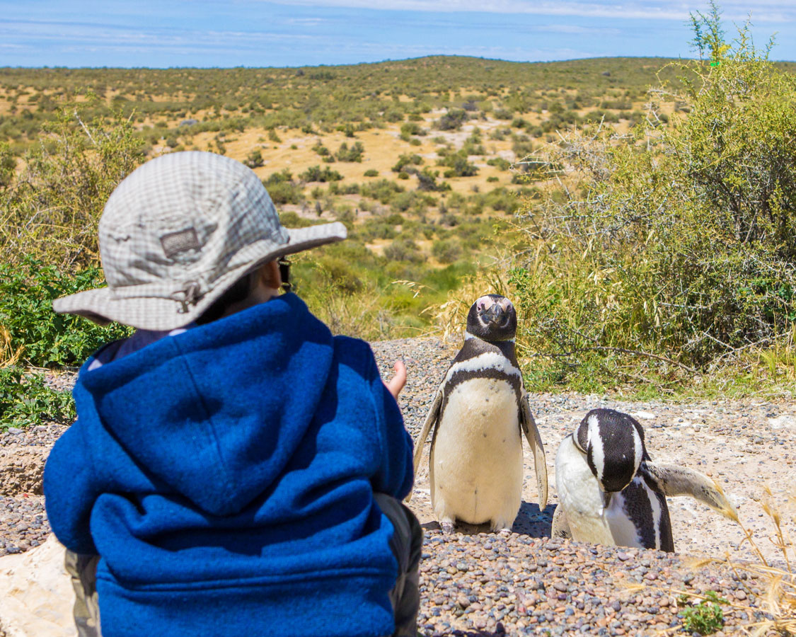 A young boy crouches down to look at some penguins in Punta Tombo Argentina