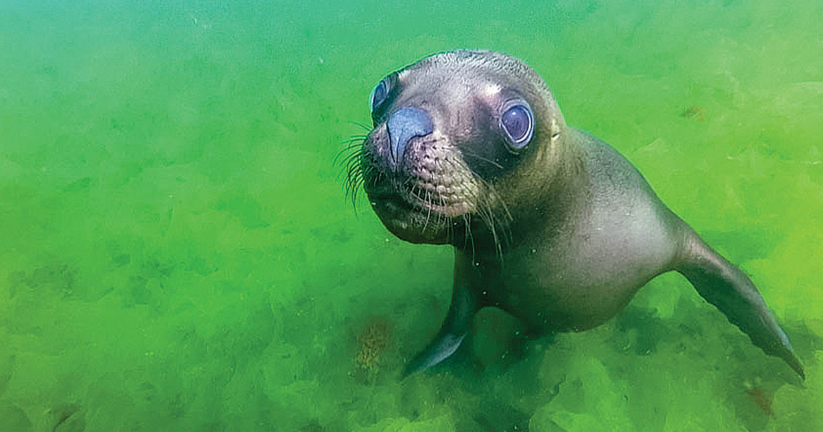 What it's like to go SCUBA diving with sea lions in Punta Loma Argentina - Adventure Family Travel - Wandering Wagars