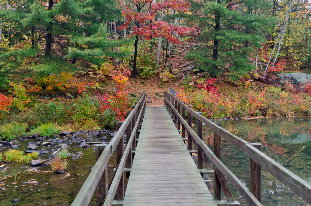 A bridge into the fall foliage of Spruce Woods Provincial Park in Manitoba. One of the most amazing places in Canada