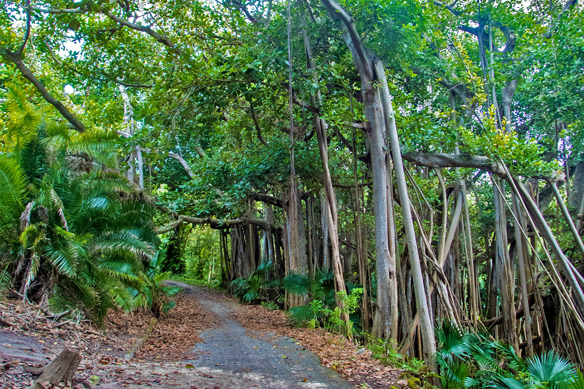 Tom Moore's Jungle is also known as the Blue Hole Park is one of the best places to visit in Bermuda with kids