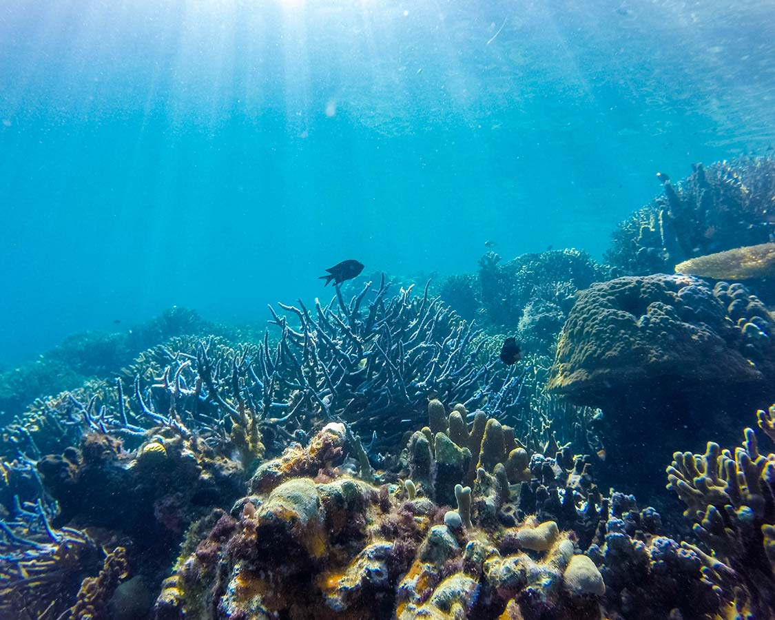 Palawan things to do SCUBA diving and snorkeling Coron