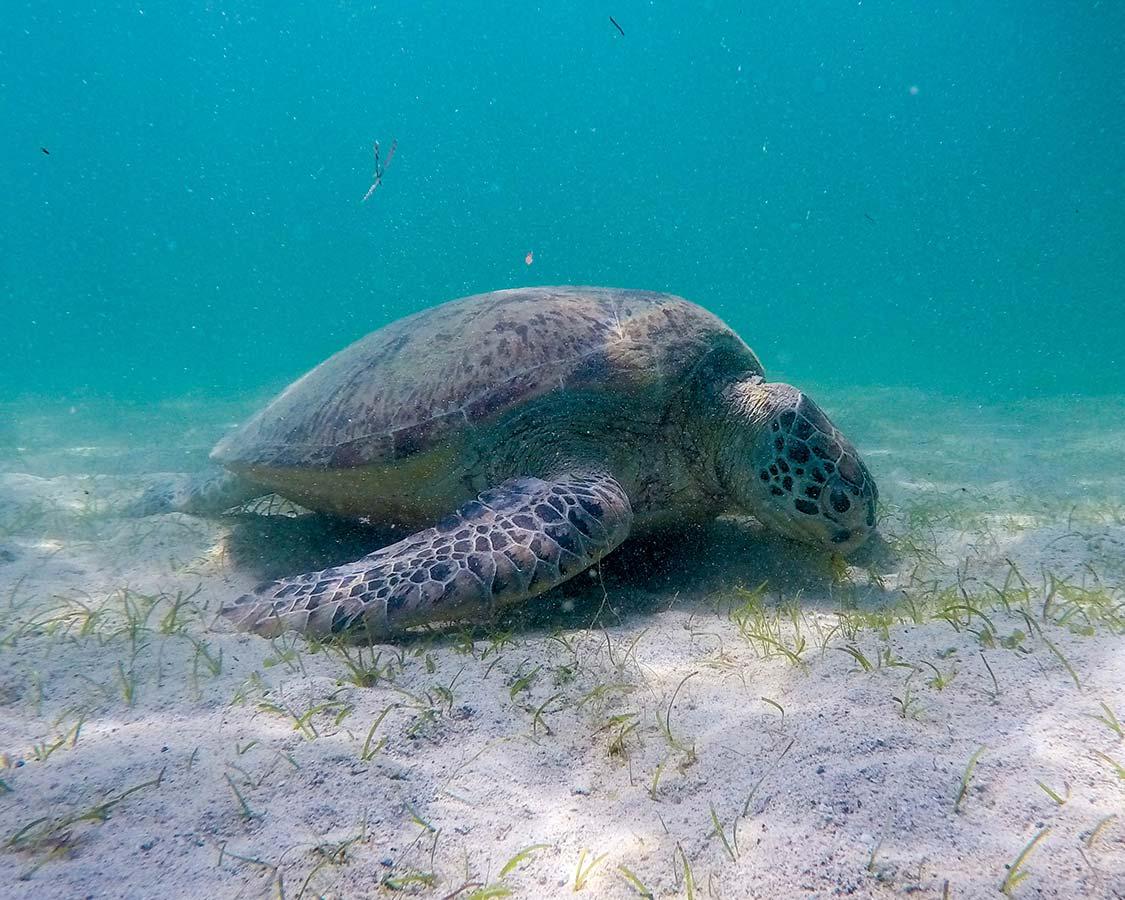 palawan things to do swim with sea turtles San Vicente
