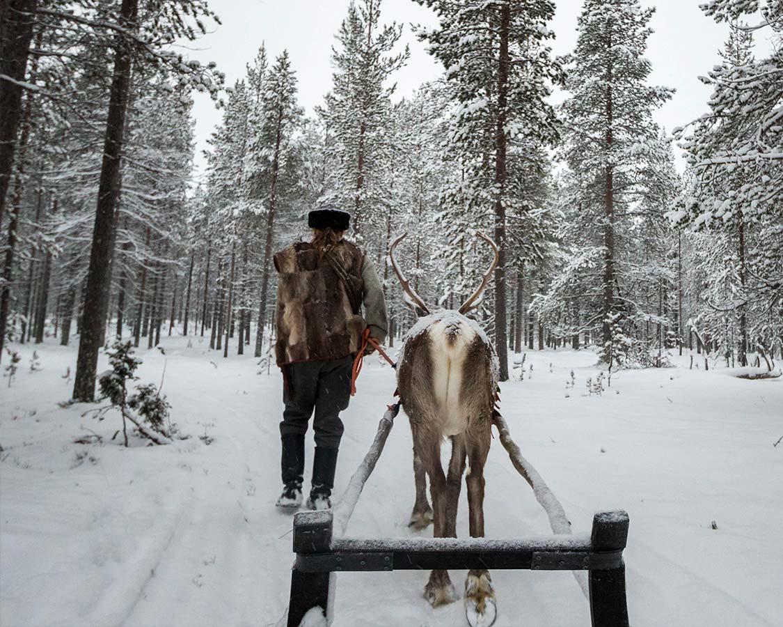 Rovaniemi Activities Reindeer Sleigh Ride