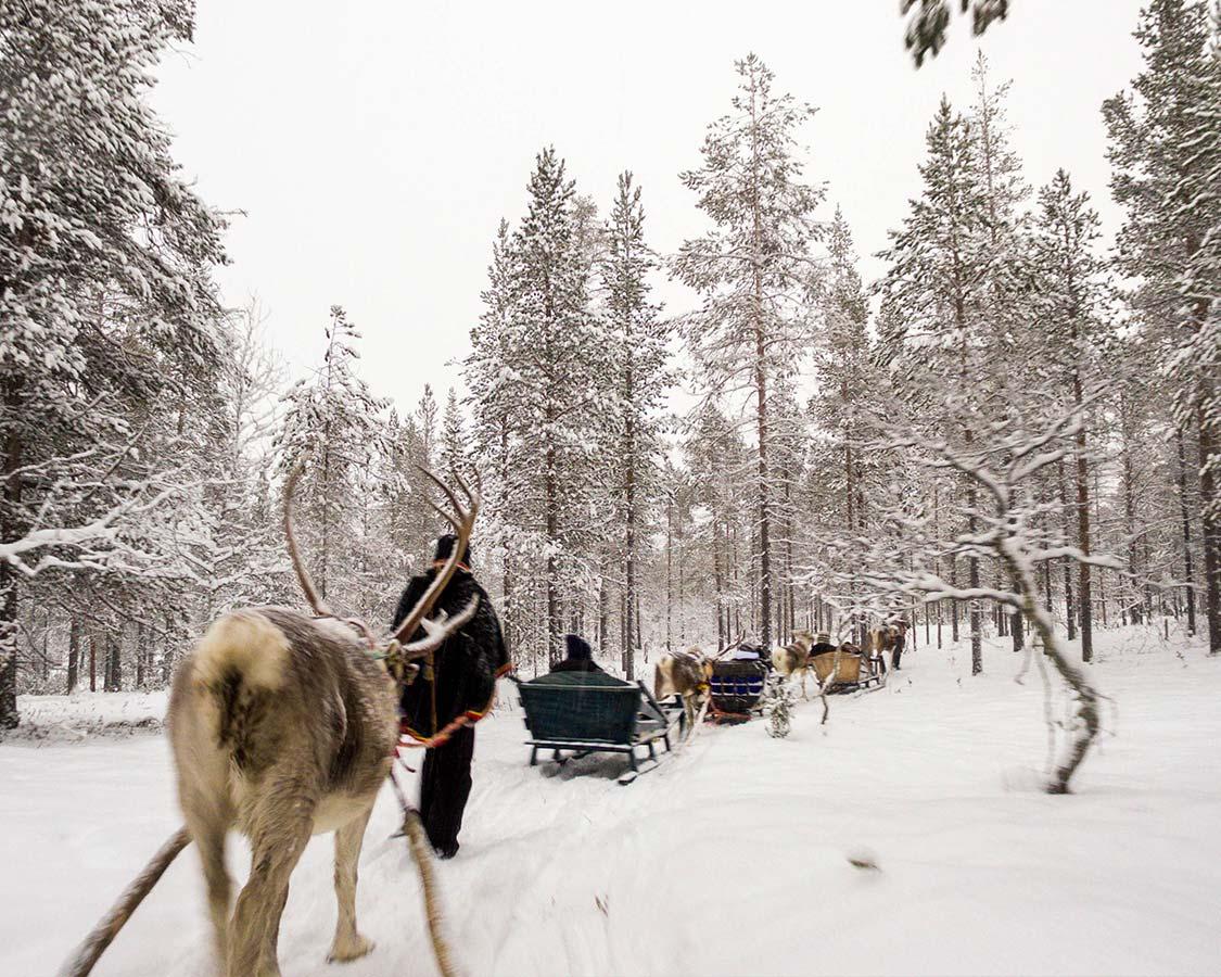 Finland-Inari-reindeer-safari