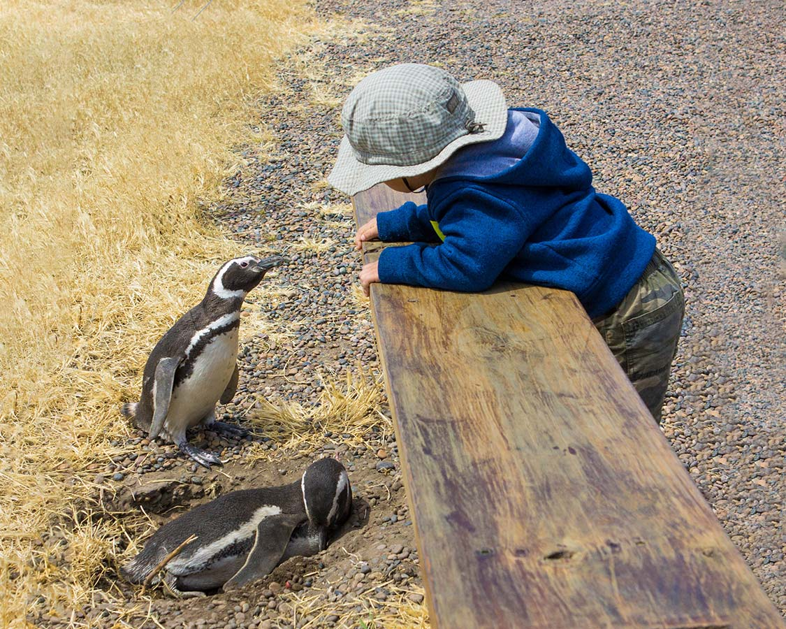 family friendly Wildlife Experiences Penguins In Argentina