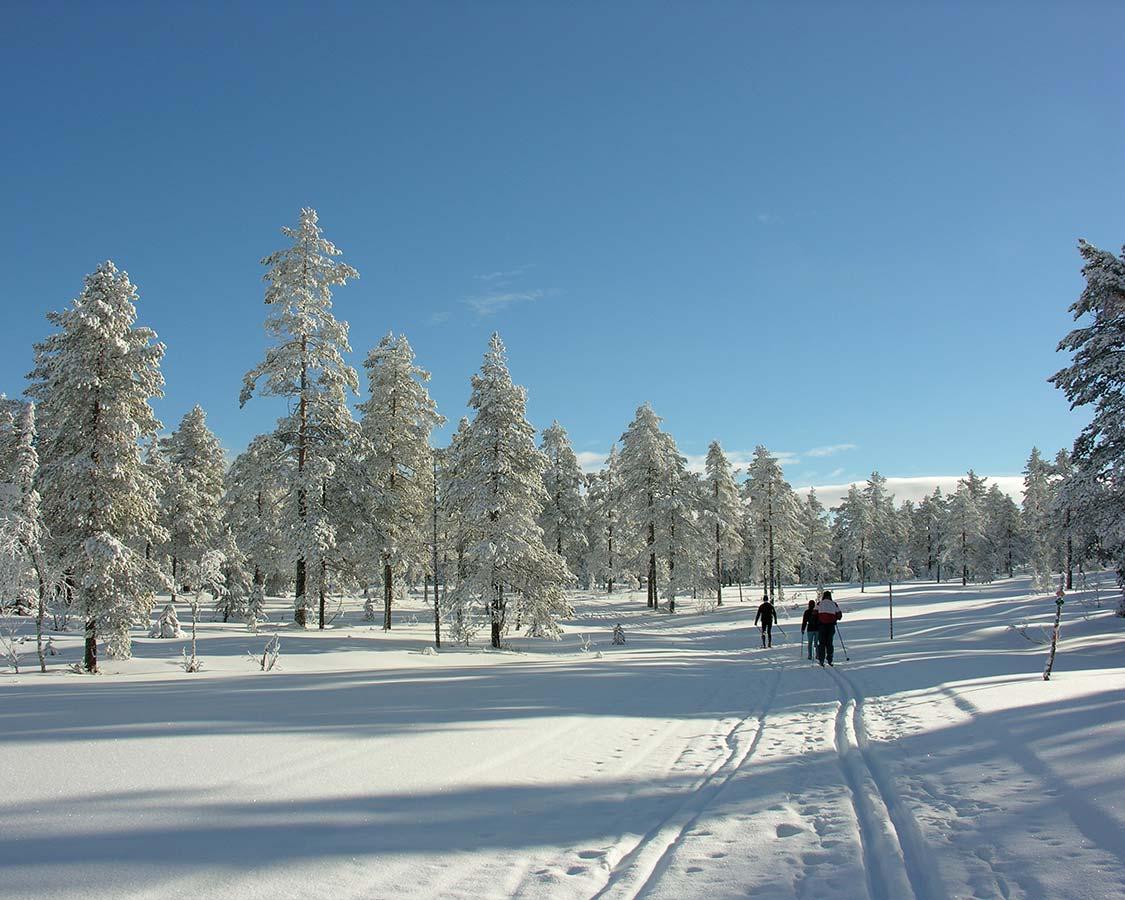 cross-country skiing in Saariselka Finland Inari