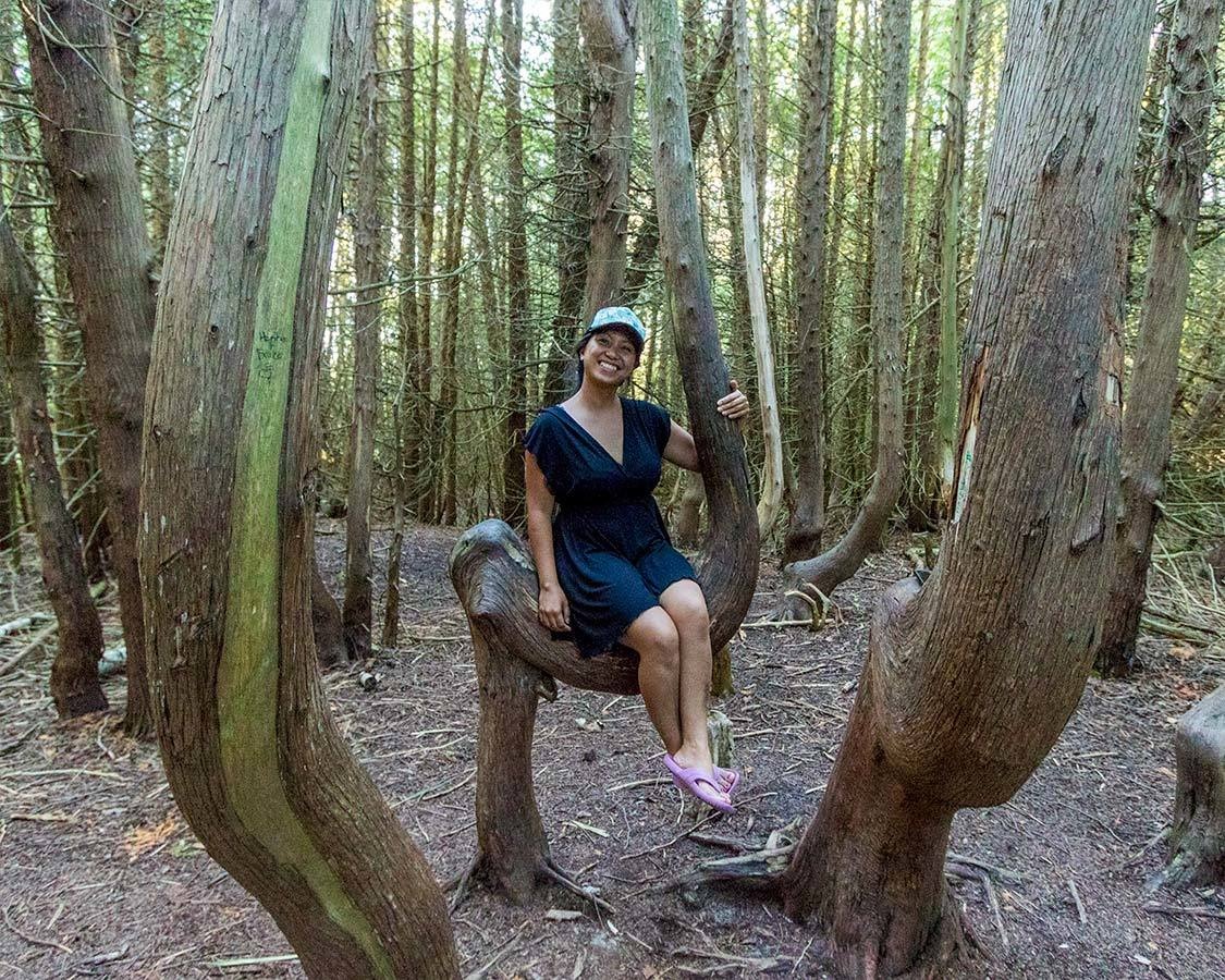 Ontario Provincial Parks Saddle Tree