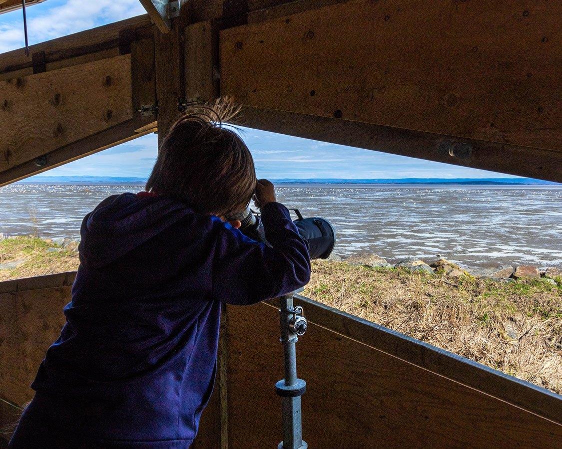 Things To Do Near Quebec City Cap Tourmente National Wildlife Area