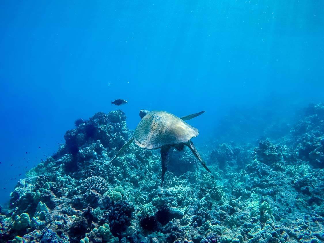 Molokini Snorkeling tour Turtle Town