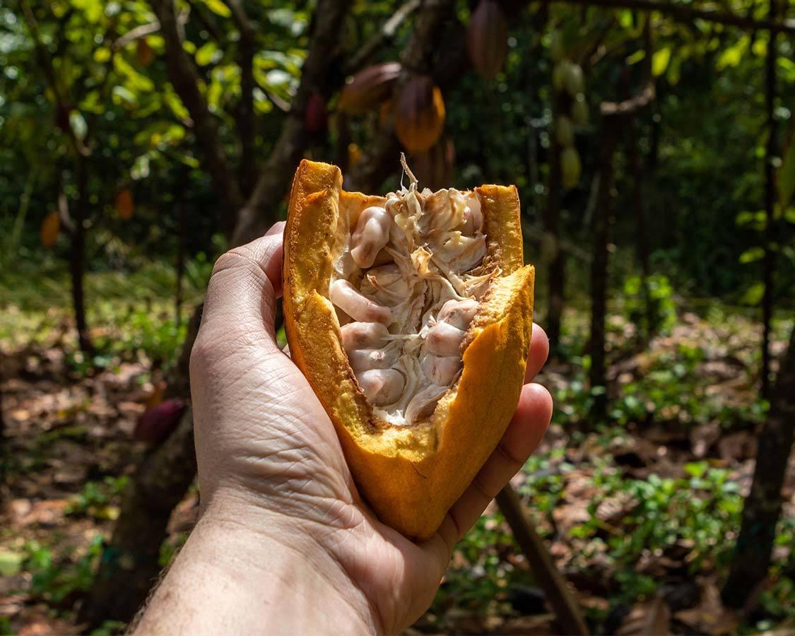 Kauai Chocolate Tour