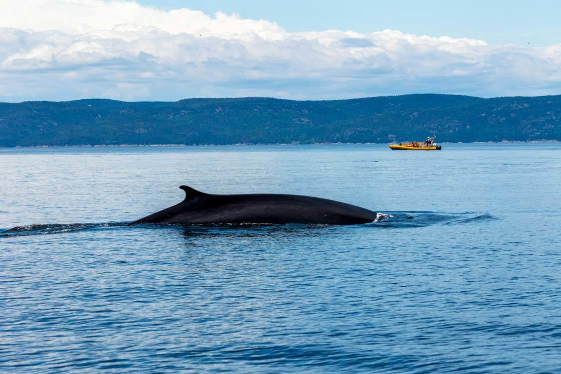 Tadoussac whale watching from Quebec City
