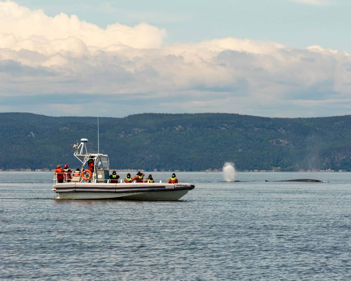 Whale watching in Tadoussac Quebec